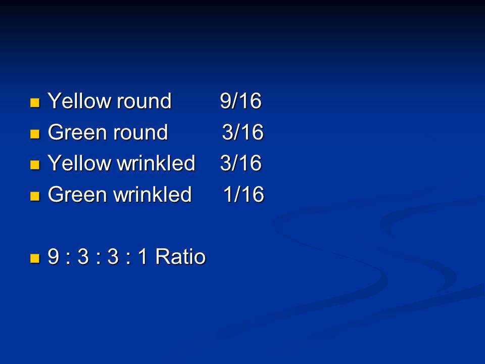 Yellow round 9/16 Yellow round 9/16 Green round 3/16 Green round 3/16 Yellow wrinkled 3/16 Yellow wrinkled 3/16 Green wrinkled 1/16 Green wrinkled 1/1