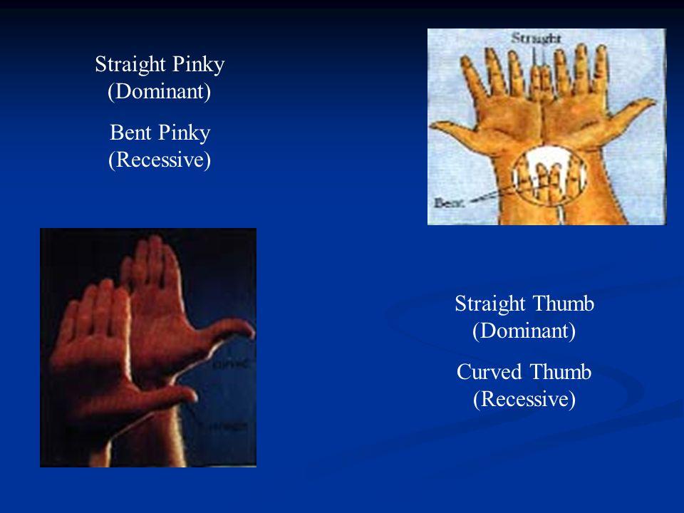 Straight Thumb (Dominant) Curved Thumb (Recessive) Straight Pinky (Dominant) Bent Pinky (Recessive)