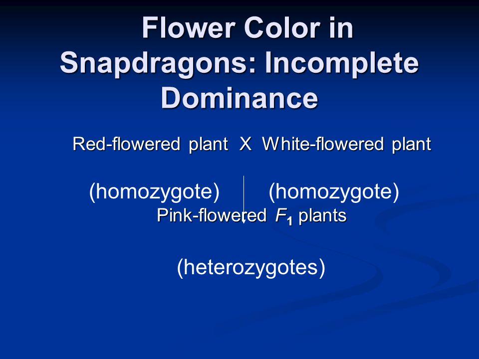 Flower Color in Snapdragons: Incomplete Dominance Flower Color in Snapdragons: Incomplete Dominance Red-flowered plant X White-flowered plant Pink-flo