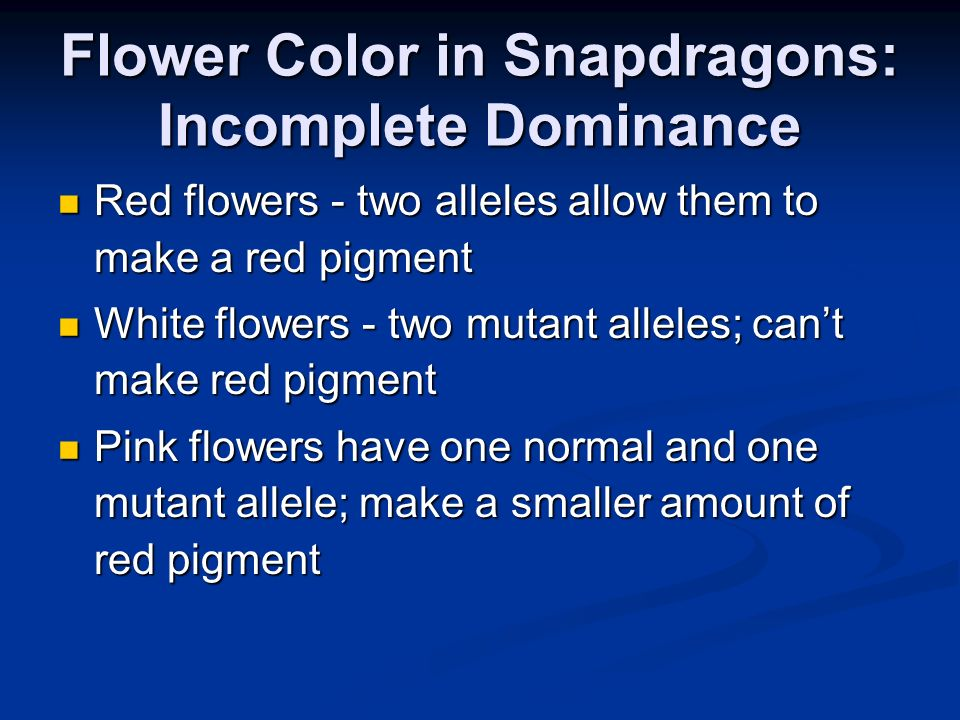 Flower Color in Snapdragons: Incomplete Dominance Red flowers - two alleles allow them to make a red pigment Red flowers - two alleles allow them to m