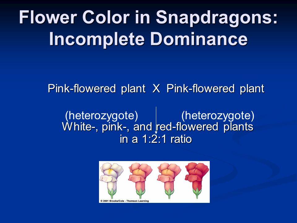 Flower Color in Snapdragons: Incomplete Dominance Pink-flowered plant X Pink-flowered plant White-, pink-, and red-flowered plants White-, pink-, and