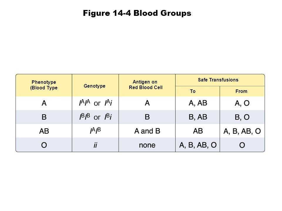 Phenotype (Blood Type Genotype Antigen on Red Blood Cell Safe Transfusions To From Figure 14-4 Blood Groups