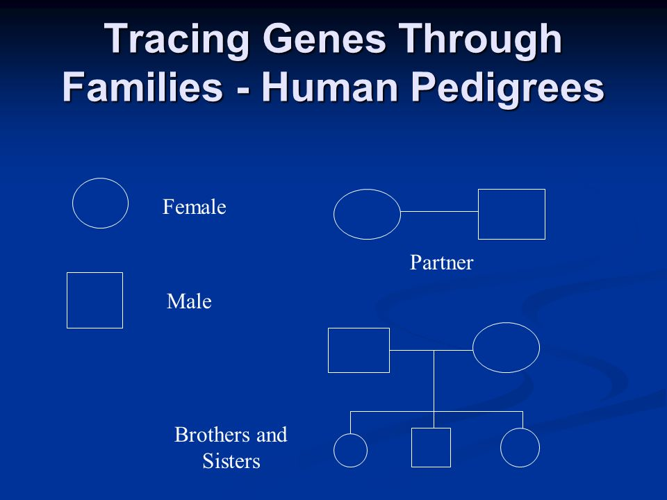 Tracing Genes Through Families - Human Pedigrees Female Male Partner Brothers and Sisters