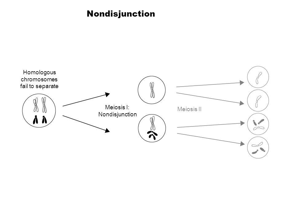 Homologous chromosomes fail to separate Meiosis I: Nondisjunction Meiosis II Nondisjunction