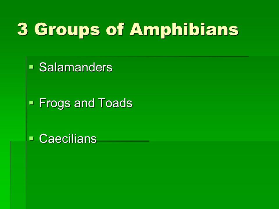 3 Groups of Amphibians Salamanders Salamanders Frogs and Toads Frogs and Toads Caecilians Caecilians