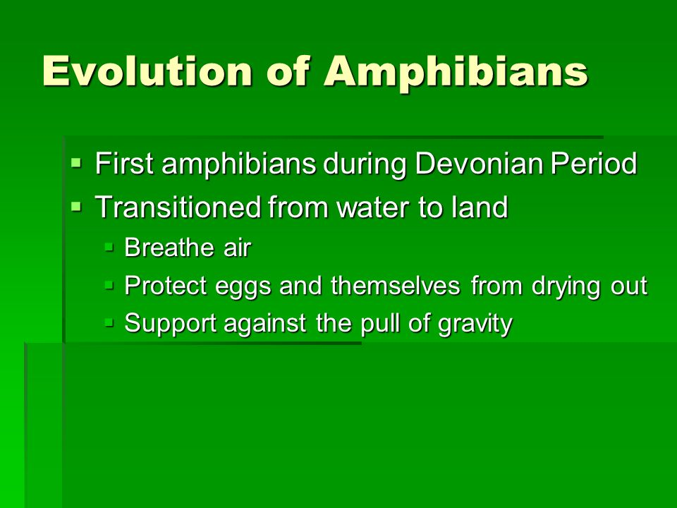 Evolution of Amphibians First amphibians during Devonian Period First amphibians during Devonian Period Transitioned from water to land Transitioned f
