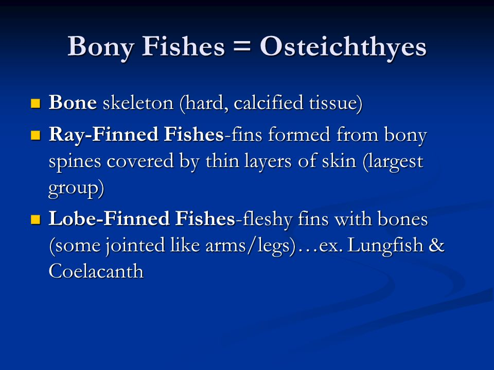 Bony Fishes = Osteichthyes Bone skeleton (hard, calcified tissue) Bone skeleton (hard, calcified tissue) Ray-Finned Fishes-fins formed from bony spine