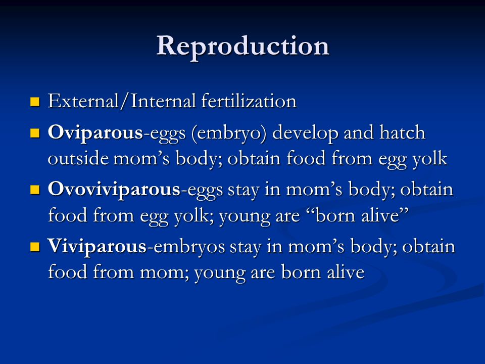 Reproduction External/Internal fertilization External/Internal fertilization Oviparous-eggs (embryo) develop and hatch outside moms body; obtain food