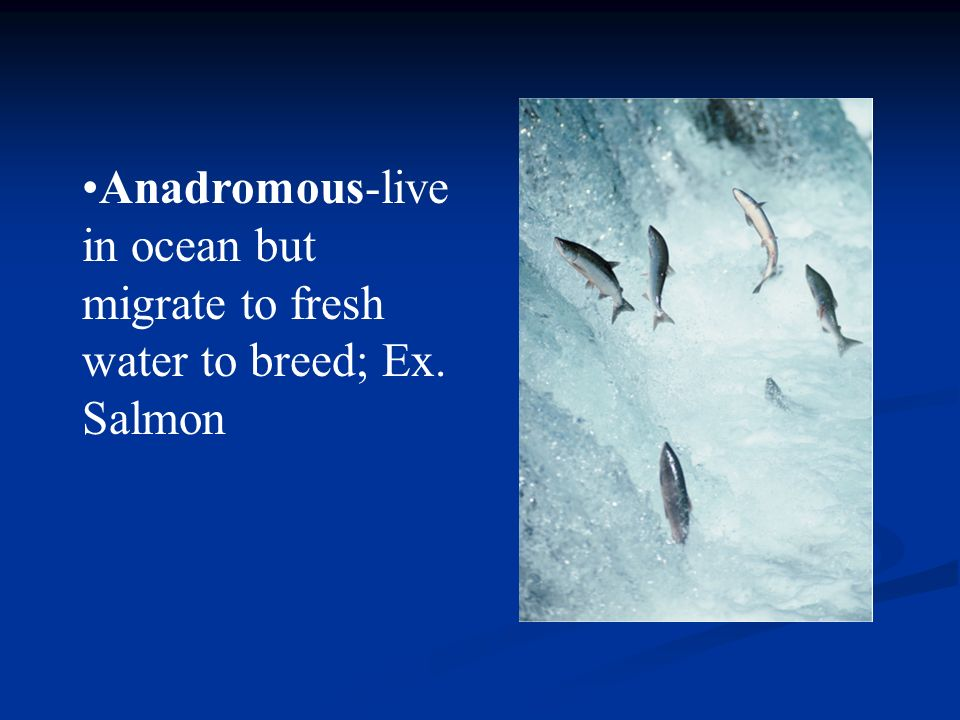 Anadromous-live in ocean but migrate to fresh water to breed; Ex. Salmon