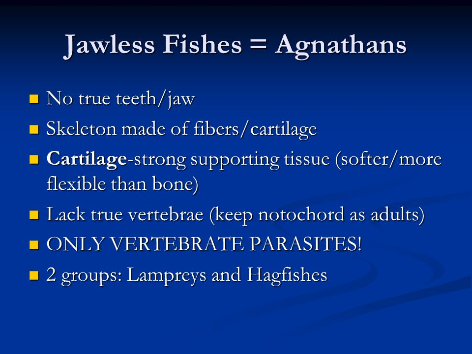 Jawless Fishes = Agnathans No true teeth/jaw No true teeth/jaw Skeleton made of fibers/cartilage Skeleton made of fibers/cartilage Cartilage-strong su