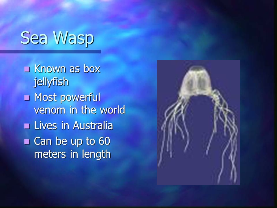 Sea Wasp Sea Wasp Known as box jellyfish Known as box jellyfish Most powerful venom in the world Most powerful venom in the world Lives in Australia L