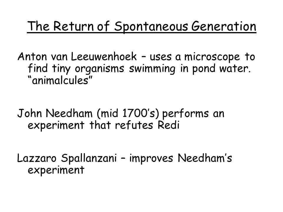 The Return of Spontaneous Generation Anton van Leeuwenhoek – uses a microscope to find tiny organisms swimming in pond water. animalcules John Needham