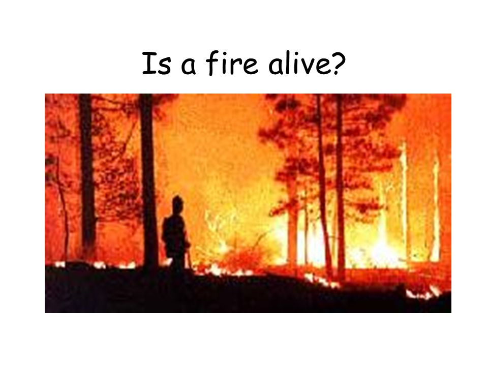 Is a fire alive?