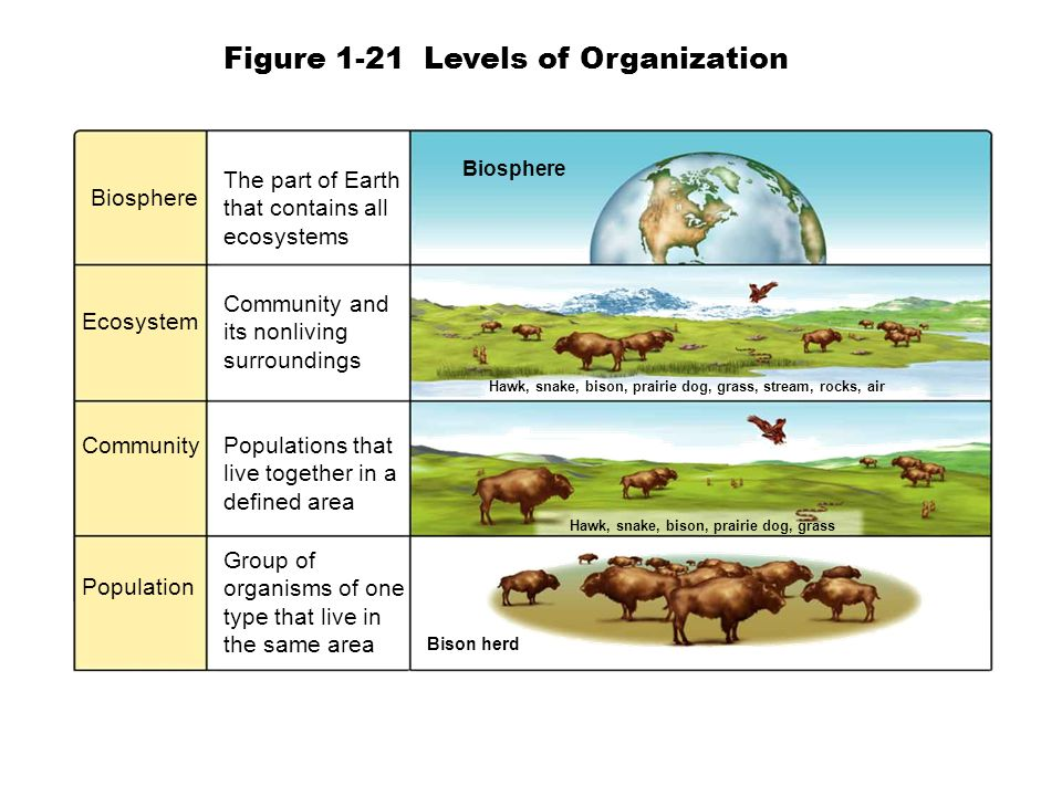 Biosphere Ecosystem Community Population The part of Earth that contains all ecosystems Community and its nonliving surroundings Populations that live