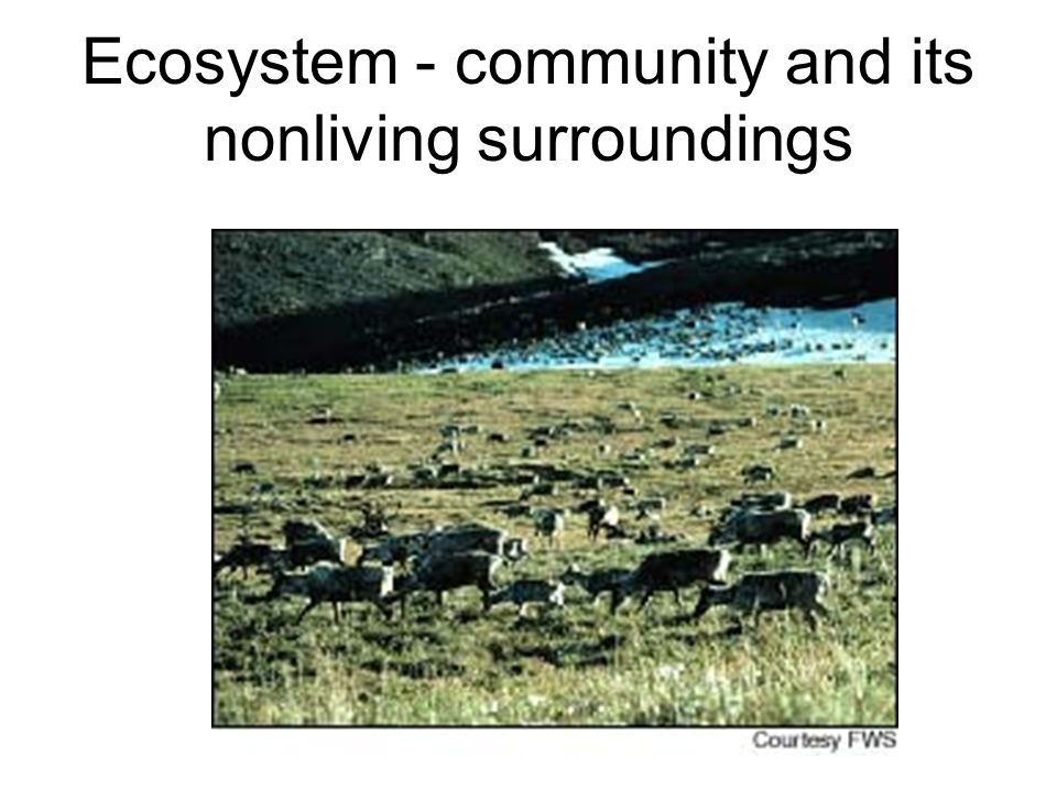 Ecosystem - community and its nonliving surroundings