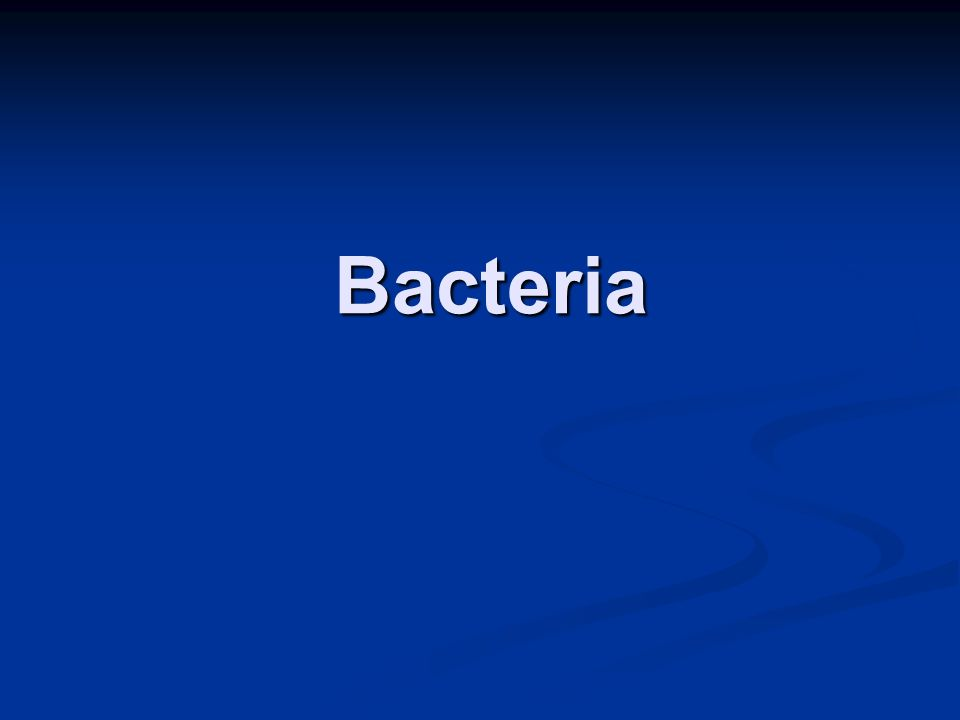 Bacteria Bacteria