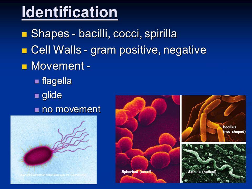 Identification Shapes - bacilli, cocci, spirilla Shapes - bacilli, cocci, spirilla Cell Walls - gram positive, negative Cell Walls - gram positive, ne