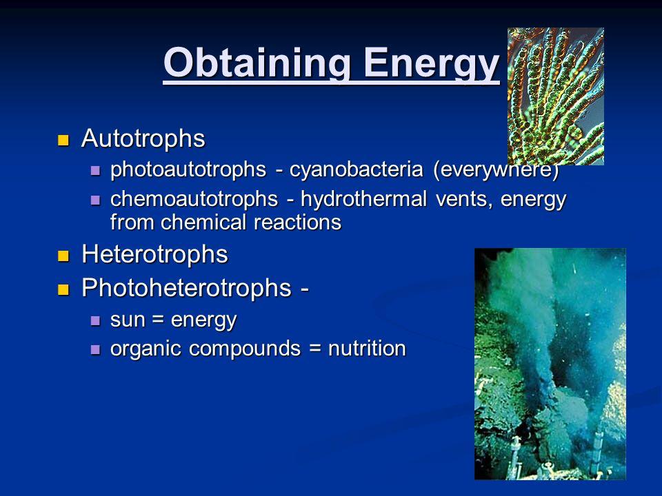 Obtaining Energy Autotrophs Autotrophs photoautotrophs - cyanobacteria (everywhere) photoautotrophs - cyanobacteria (everywhere) chemoautotrophs - hyd