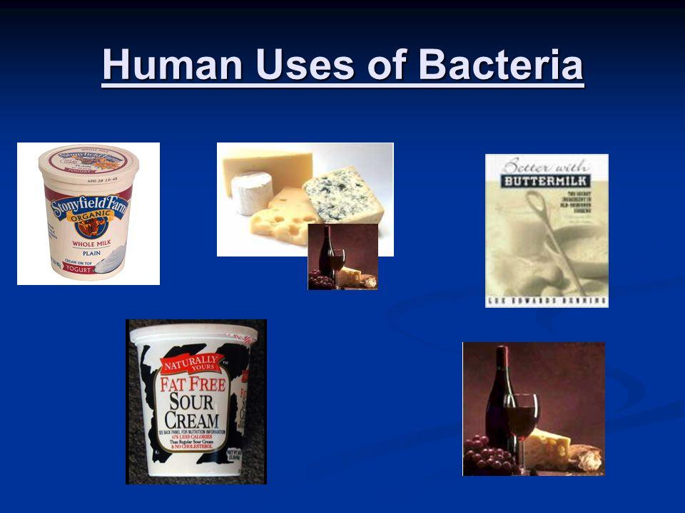 Human Uses of Bacteria