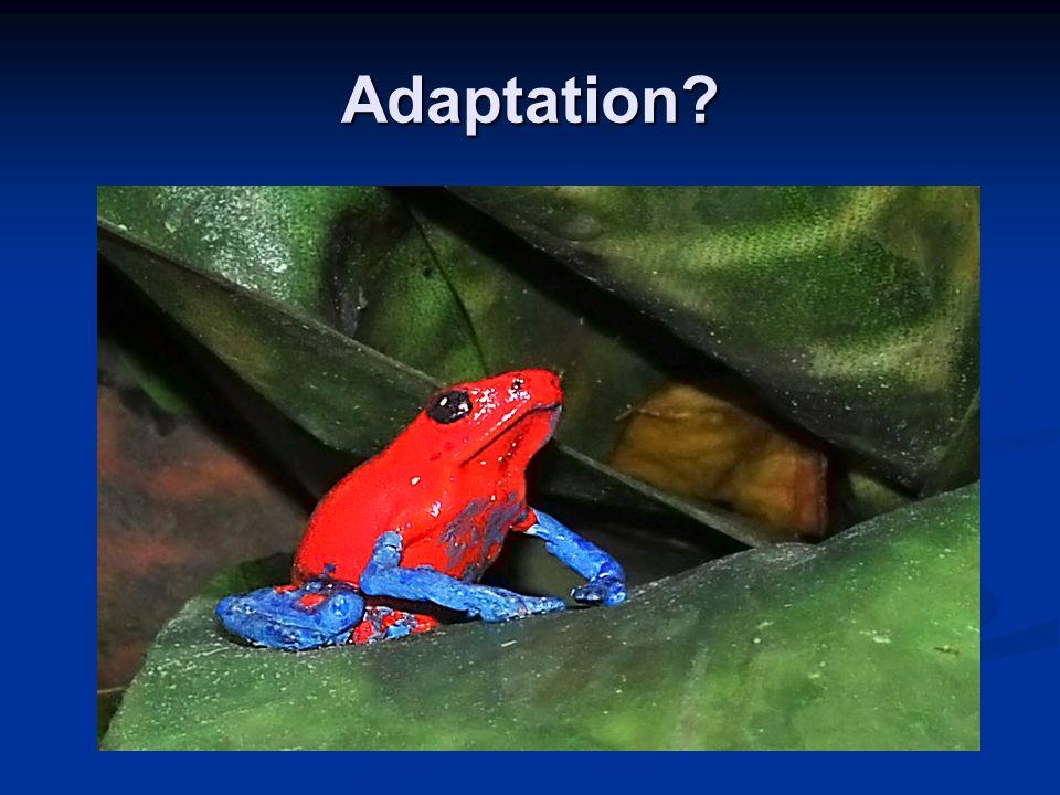 Adaptation?