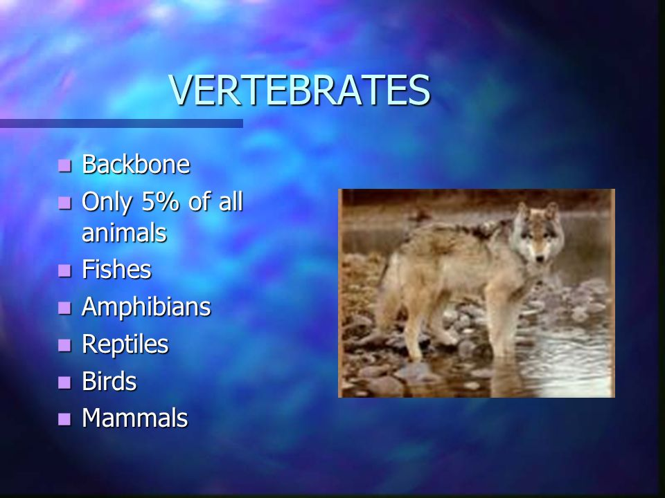 What Animals Do to Survive Feeding, Respiration, Circulation, Excretion, Response, Movement & Reproduction
