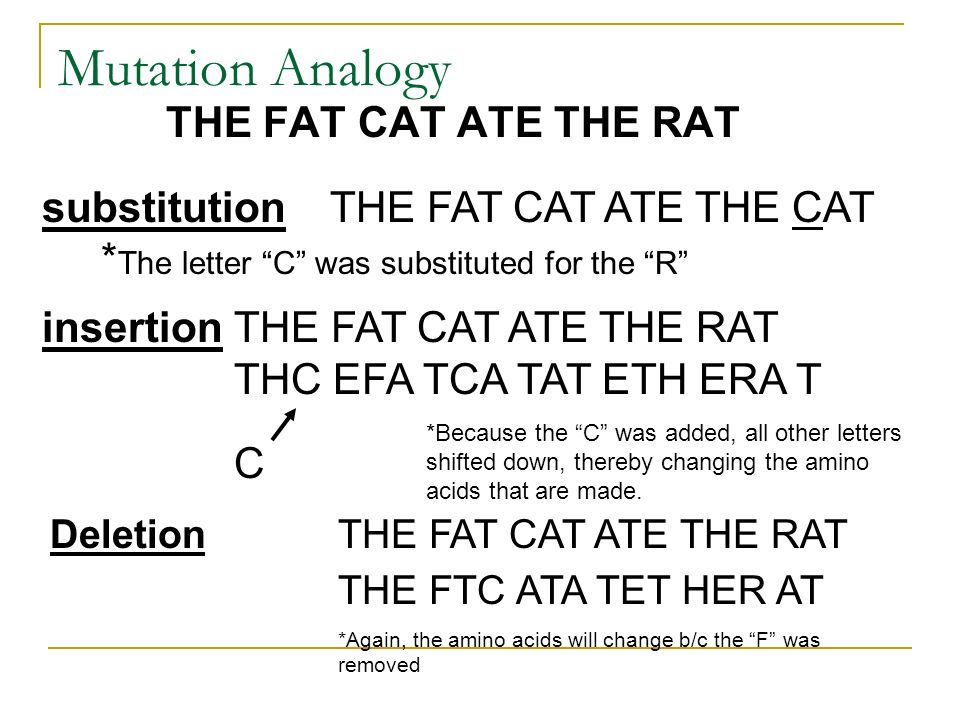 Mutation Analogy THE FAT CAT ATE THE RAT substitution THE FAT CAT ATE THE CAT * The letter C was substituted for the R insertionTHE FAT CAT ATE THE RA