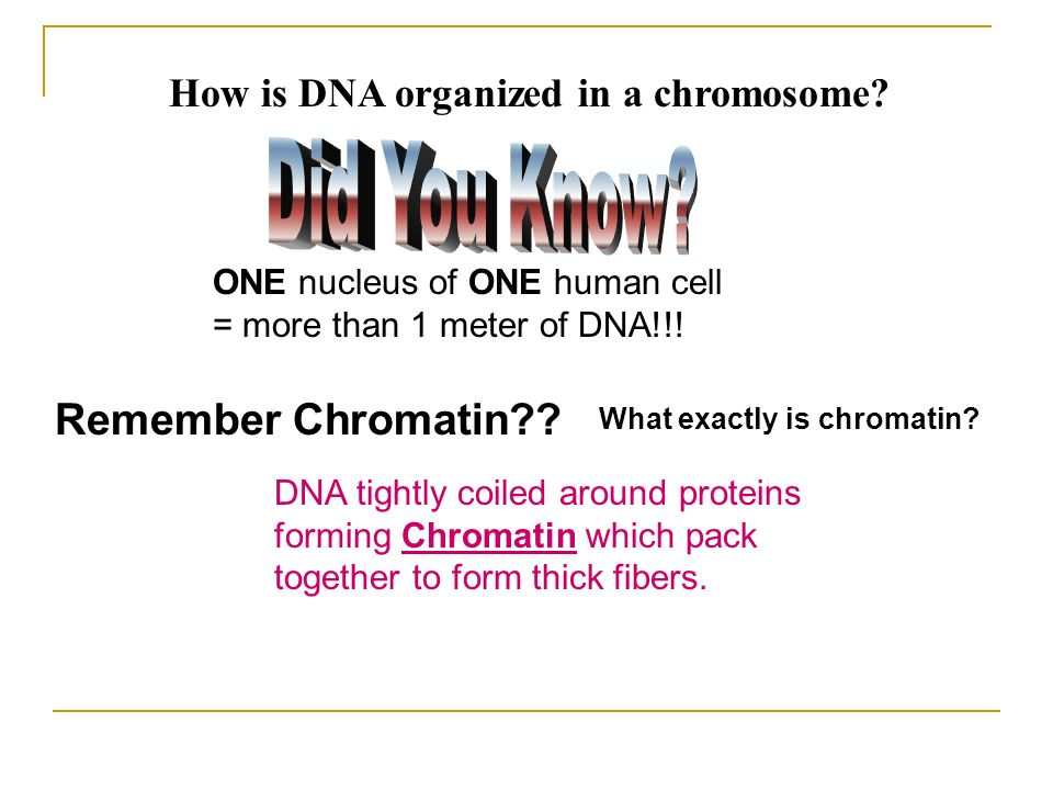 How is DNA organized in a chromosome? Remember Chromatin?? DNA tightly coiled around proteins forming Chromatin which pack together to form thick fibe