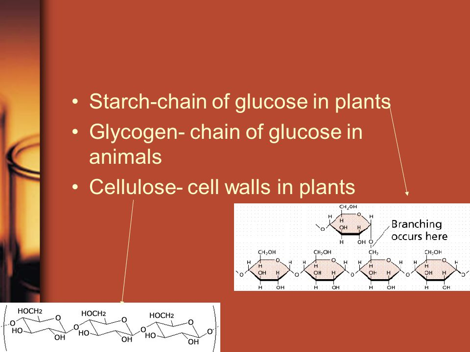 Starch-chain of glucose in plants Glycogen- chain of glucose in animals Cellulose- cell walls in plants