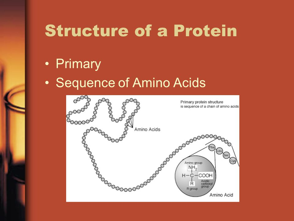 Structure of a Protein Primary Sequence of Amino Acids