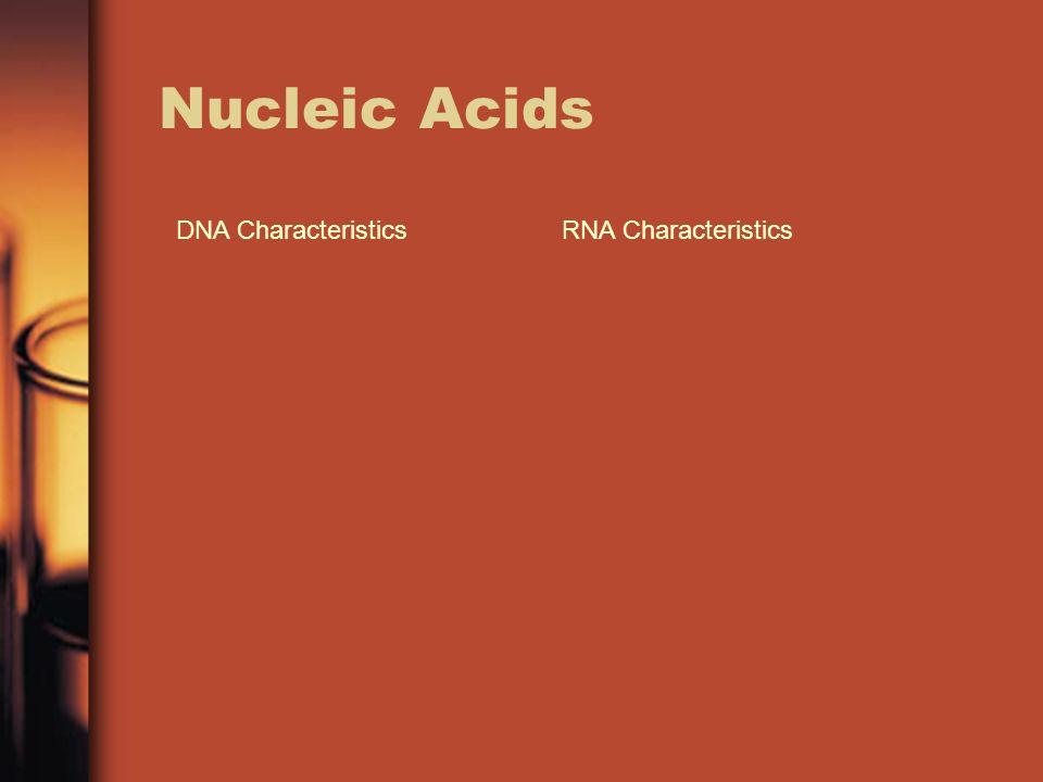 Nucleic Acids DNA Characteristics RNA Characteristics