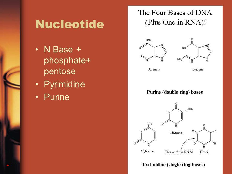 Nucleotide N Base + phosphate+ pentose Pyrimidine Purine