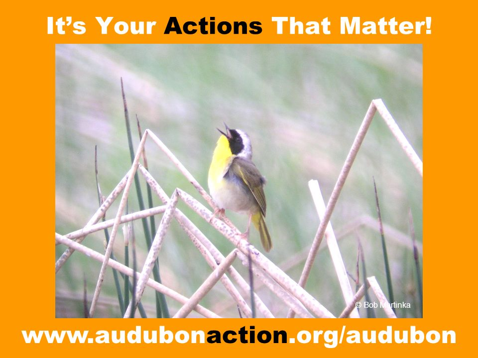 Its Your Actions That Matter!   © Bob Martinka