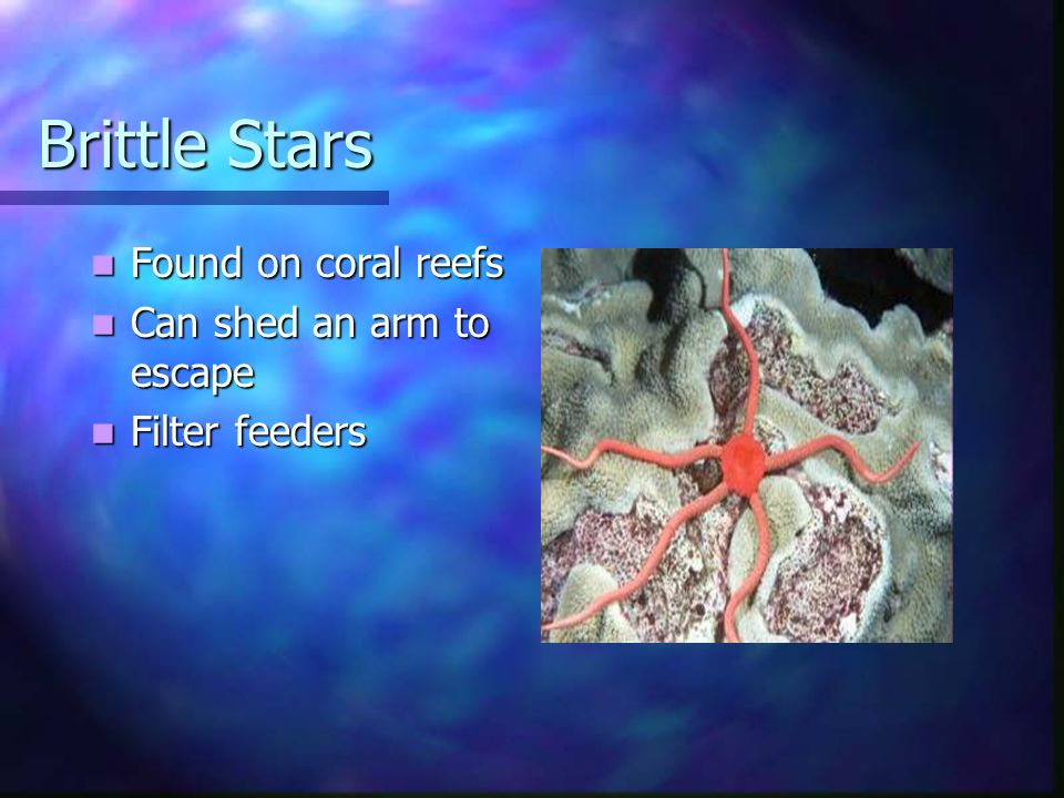 Brittle Stars Found on coral reefs Found on coral reefs Can shed an arm to escape Can shed an arm to escape Filter feeders Filter feeders