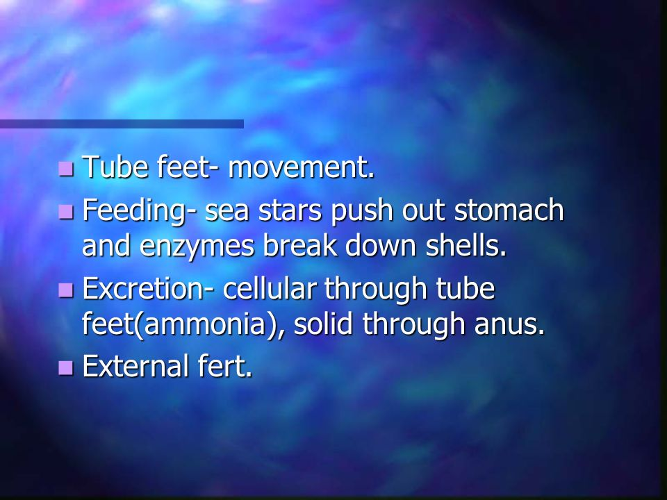 Tube feet- movement. Tube feet- movement. Feeding- sea stars push out stomach and enzymes break down shells. Feeding- sea stars push out stomach and e