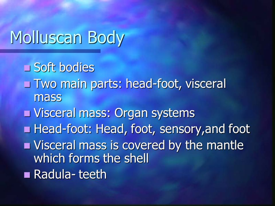 Molluscan Body Soft bodies Soft bodies Two main parts: head-foot, visceral mass Two main parts: head-foot, visceral mass Visceral mass: Organ systems