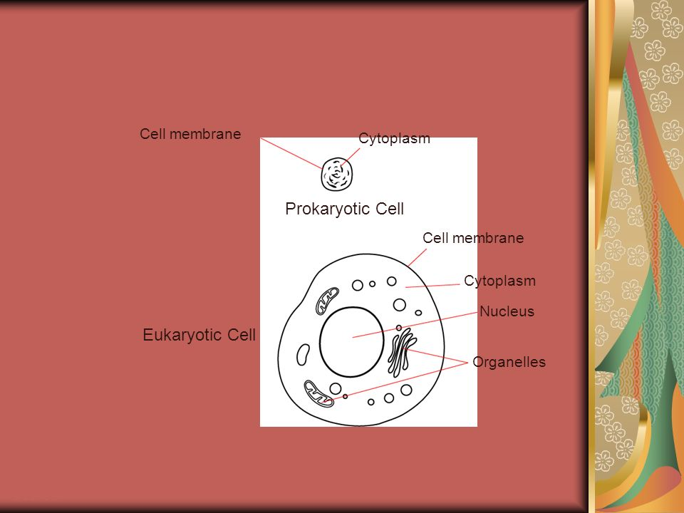 Prokaryotic Cell Cell membrane Cytoplasm Nucleus Organelles Eukaryotic Cell Section 7-1 Go to Section:
