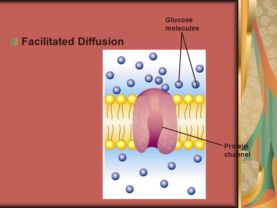 Facilitated Diffusion Protein channel Glucose molecules