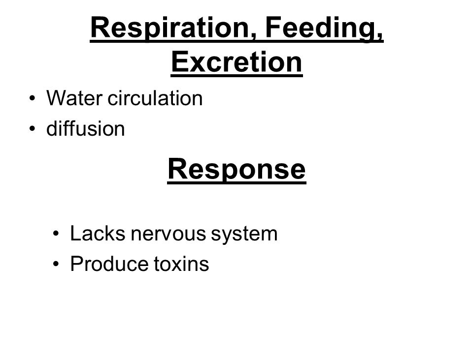 Respiration, Feeding, Excretion Water circulation diffusion Response Lacks nervous system Produce toxins