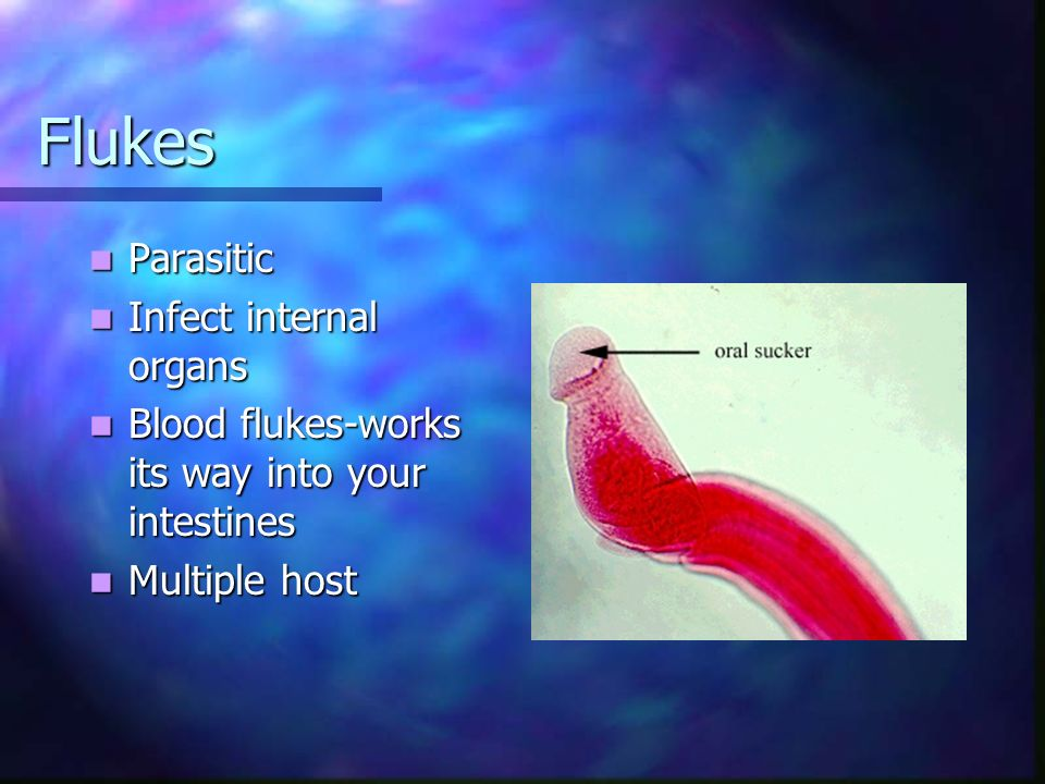 Flukes Parasitic Parasitic Infect internal organs Infect internal organs Blood flukes-works its way into your intestines Blood flukes-works its way in