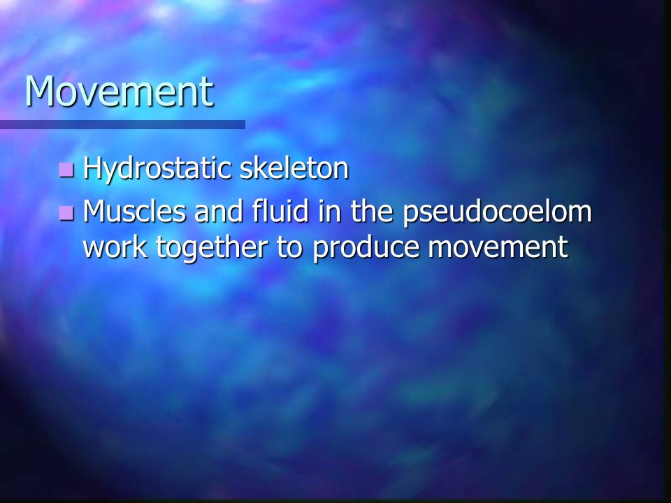 Movement Hydrostatic skeleton Hydrostatic skeleton Muscles and fluid in the pseudocoelom work together to produce movement Muscles and fluid in the ps