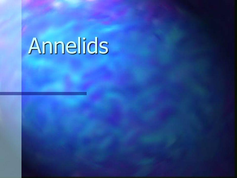 Annelids