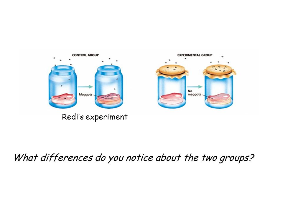 Redis experiment What differences do you notice about the two groups?