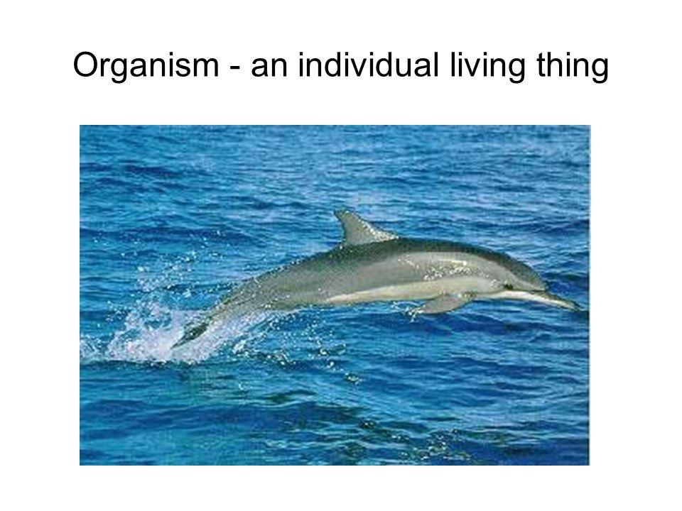 Organism - an individual living thing