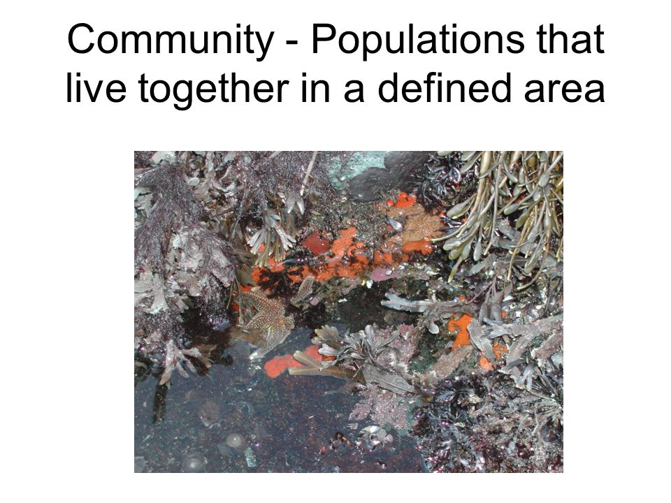 Community - Populations that live together in a defined area