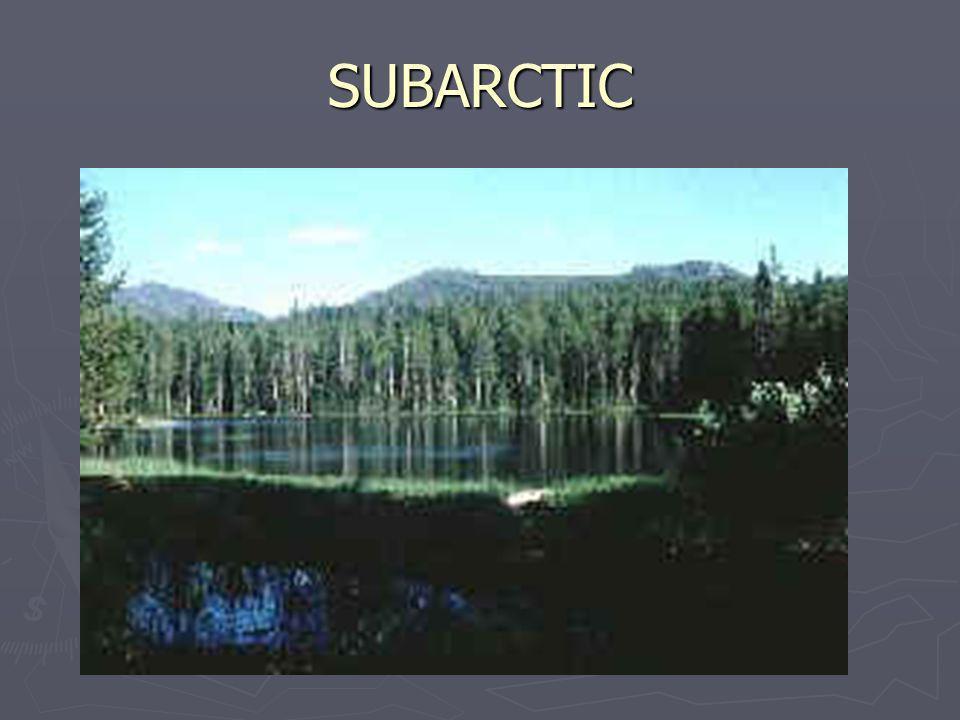 SUBARCTIC