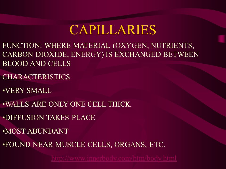 CAPILLARIES http://www.innerbody.com/htm/body.html FUNCTION: WHERE MATERIAL (OXYGEN, NUTRIENTS, CARBON DIOXIDE, ENERGY) IS EXCHANGED BETWEEN BLOOD AND