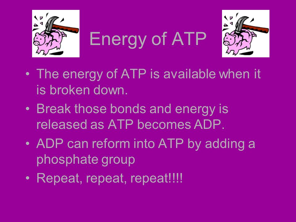 Energy of ATP The energy of ATP is available when it is broken down.