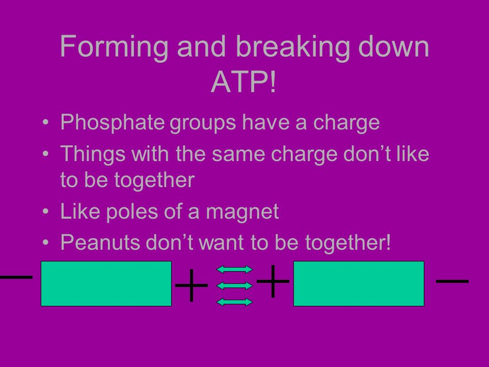 Forming and breaking down ATP.