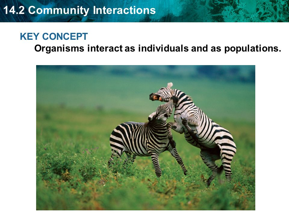14.2 Community Interactions KEY CONCEPT Organisms interact as individuals and as populations.