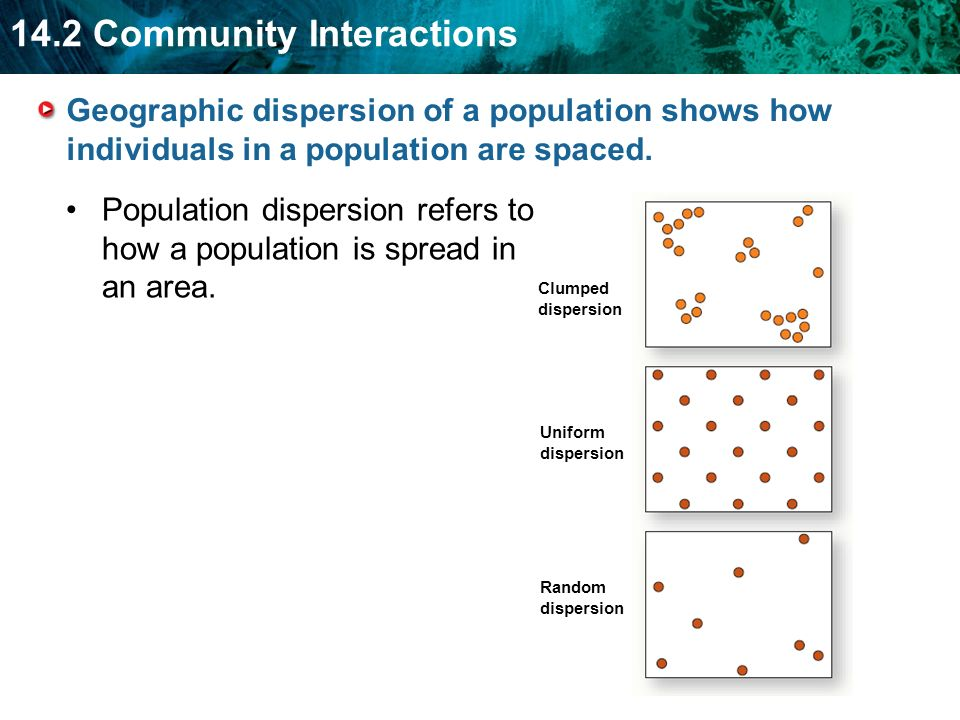 14.2 Community Interactions Population dispersion refers to how a population is spread in an area. Geographic dispersion of a population shows how ind